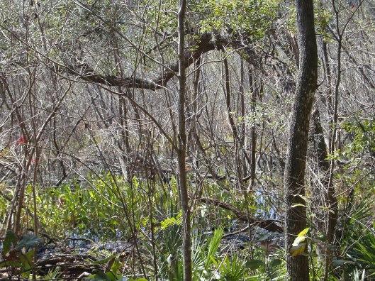 Biven S Arm Nature Park